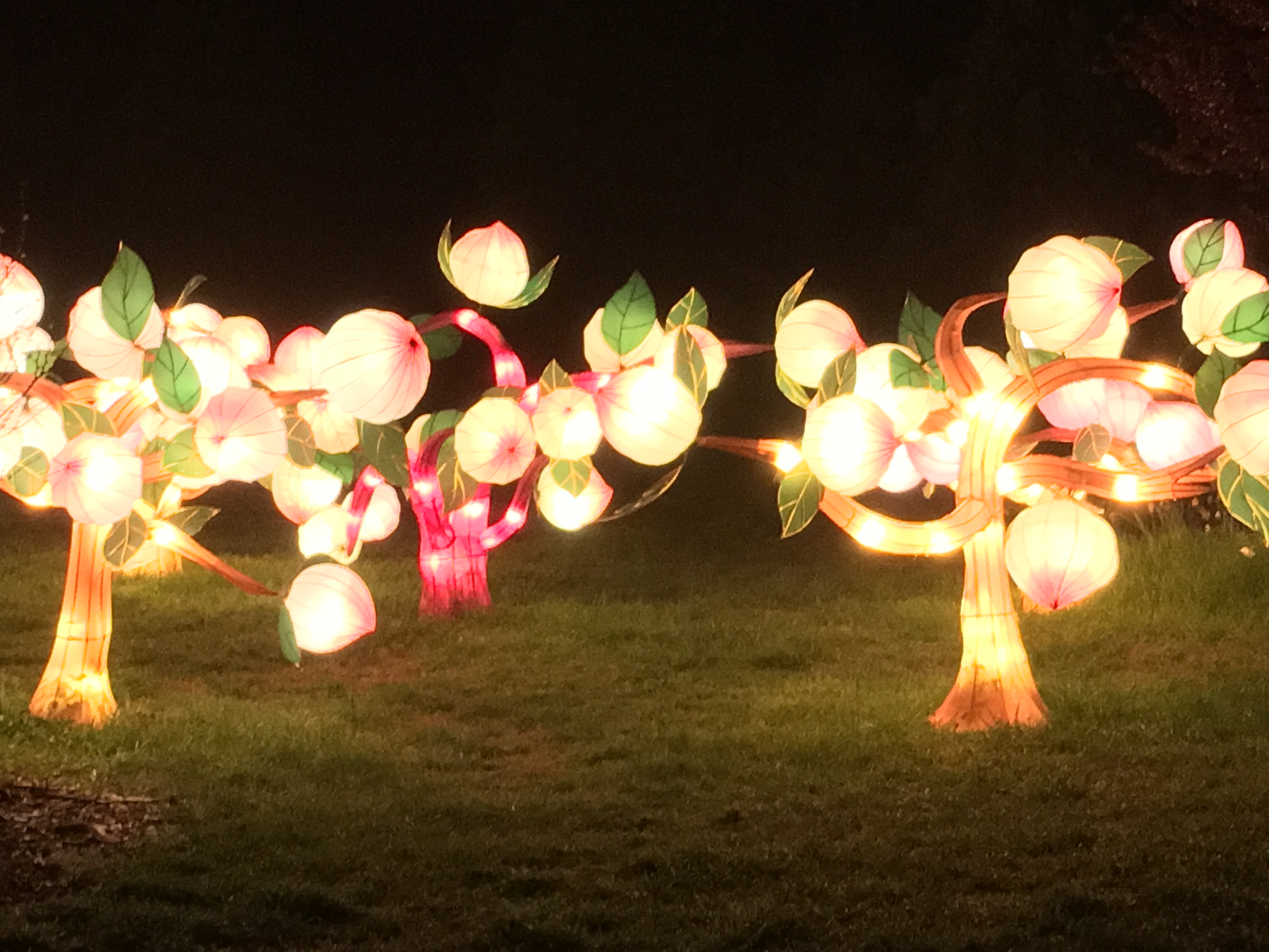 Magic by Night…Lantern Asia | Jumping Out of the Box